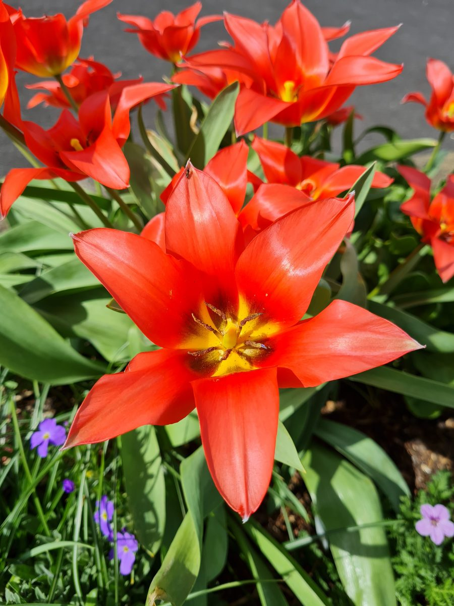 Spring: Time to reset goals as we emerge from lockdown. The picture shows beautiful flower, which represent springtime.